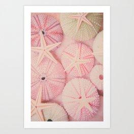 Seashells, Shells, Sea Urchin, Starfish, Pink, Beach, Pastel, Ocean, Sea, Nature Art Print