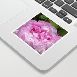 Pink Peony with Rain Drops Sticker