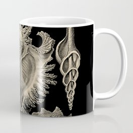"""""""Prosobranchia"""" from """"Art Forms of Nature"""" by Ernst Haeckel Coffee Mug"""