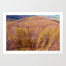 Deciduous beech forest view in spring, forest landscape Art Print