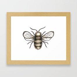 Bumble Bee - Katrina Niswander Framed Art Print