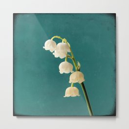 Botanical Flower Photograph - Lilies of the Valley Metal Print