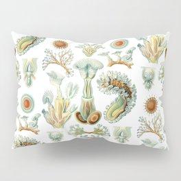 Ernst Haeckel - Scientific Illustration - Bryozoa Pillow Sham
