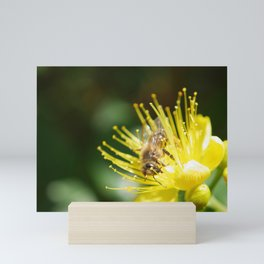 Bee Emerging Forest of Stamens on Yellow Flower Mini Art Print