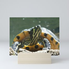 Turtle Sunbathing Mini Art Print