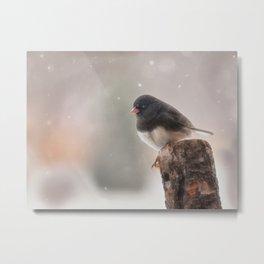 Winter Birds - Junco Metal Print