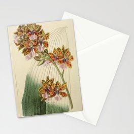 Flower 1887 oncidium lanceanum Mr Lance s Oncidium20 Stationery Cards