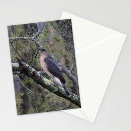 Hawk Stationery Cards
