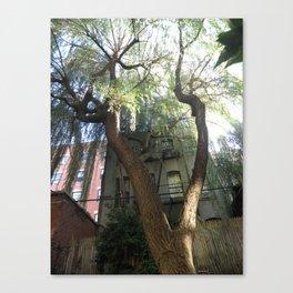 above Canvas Print