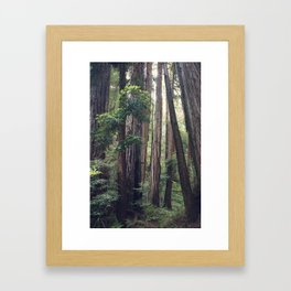 The Redwoods at Muir Woods Framed Art Print