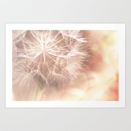 Pink Macro (2) Dandelion Flower - Floral Nature Photography Art and Accessories Art Print