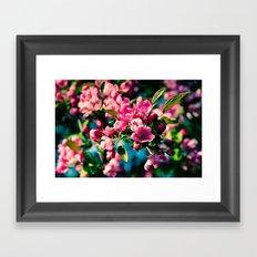 Pink Crab Apple Flowers Framed Art Print