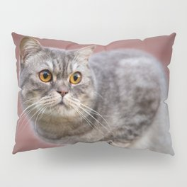 British shorthair cat on the wall Pillow Sham