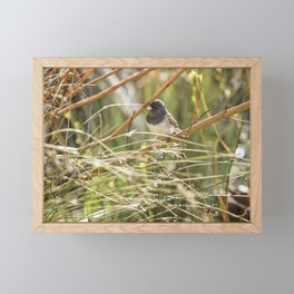 Dark-eyed Junco Sitting Pretty Framed Mini Art Print