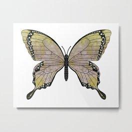 aubergine limelight swallowtail (Papilio linta) Metal Print