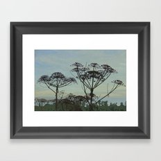 Heracleum Framed Art Print