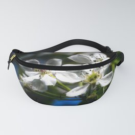 white pearblossom in the springtime Fanny Pack