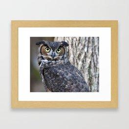 The Great Horned Owl Framed Art Print