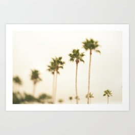 Boulevard Palm Trees Art Print
