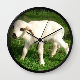 A Newborn Lamb Finding Its Feet Wall Clock