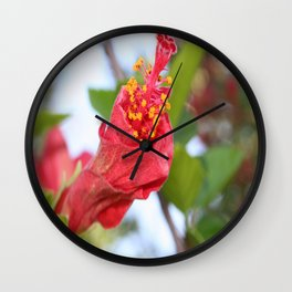 Curled Petals of A Red Hibiscus Bud Wall Clock