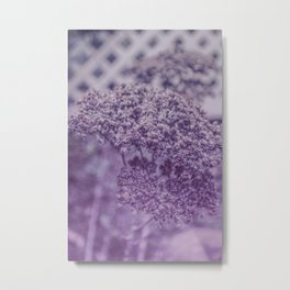 Sedum in Winter Metal Print