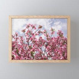 Pink blossoms Blue sky Framed Mini Art Print