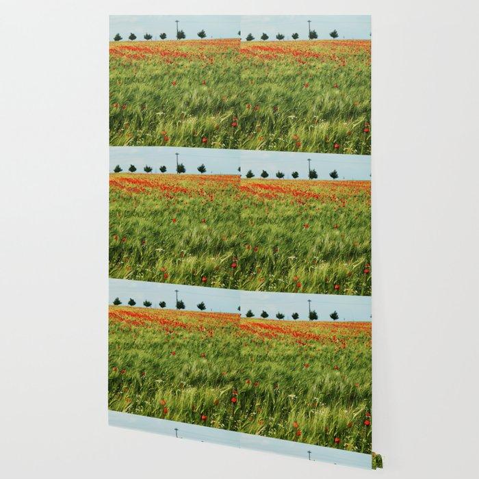 Field of Poppies Wallpaper