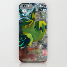 Squishy nembrotha nudi hanging on for dear life iPhone Case