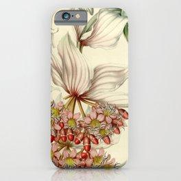 Flower medinilla magnifica7 iPhone Case