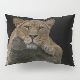 Lioness Looking At You Pillow Sham