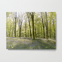 Bluebells of Micheldever Wood Metal Print
