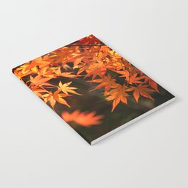 Red and orange Japanese Maple Leaves In Fall Photography Notebook