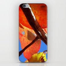 New Leaves iPhone & iPod Skin