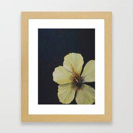 Sunlit Hibiscus Framed Art Print