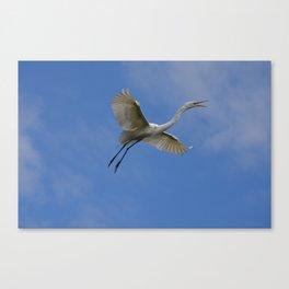 Stunning Egret in Flight Canvas Print