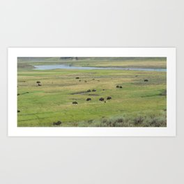 Where the Buffalo/Bison Roam Art Print