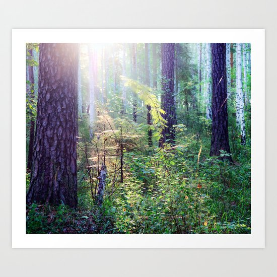 Sunny morning in the forest Art Print