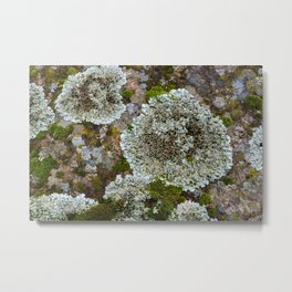Lichen and moss on bark natural pattern  Metal Print