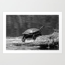 Painted Turtle on a Log (B&W) - Photography Art Print