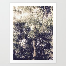 Dappled Light Filtered Through Trees Art Print