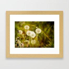 Dandelions Framed Art Print