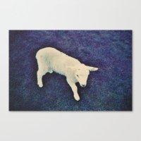 lamb Canvas Prints featuring Lamb by Richard PJ Lambert