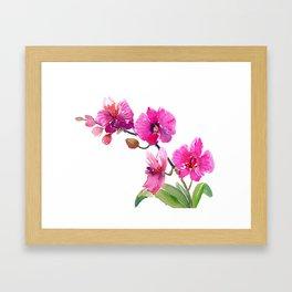 Pink Orchids, pink room floral orchid design Framed Art Print