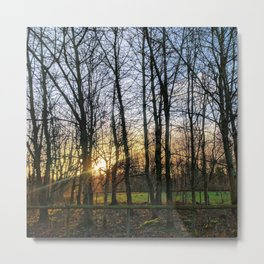 Morning Sun Through the Trees Metal Print