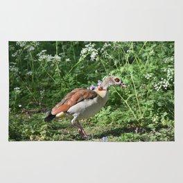 British Bird Rug