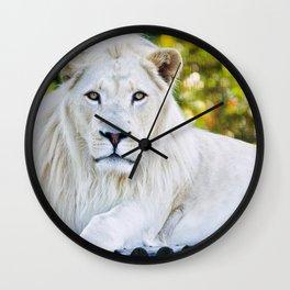 Wonderful Beautiful Big Male White Lion Lying Down Close Up Ultra HD Wall Clock