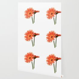 isolated gerbera daisy in the vase Wallpaper