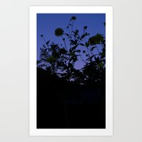 weeds and night sky Art Print