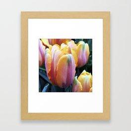 Vibrant Tulips Hybrid in Spring Garden (Instagram) Framed Art Print